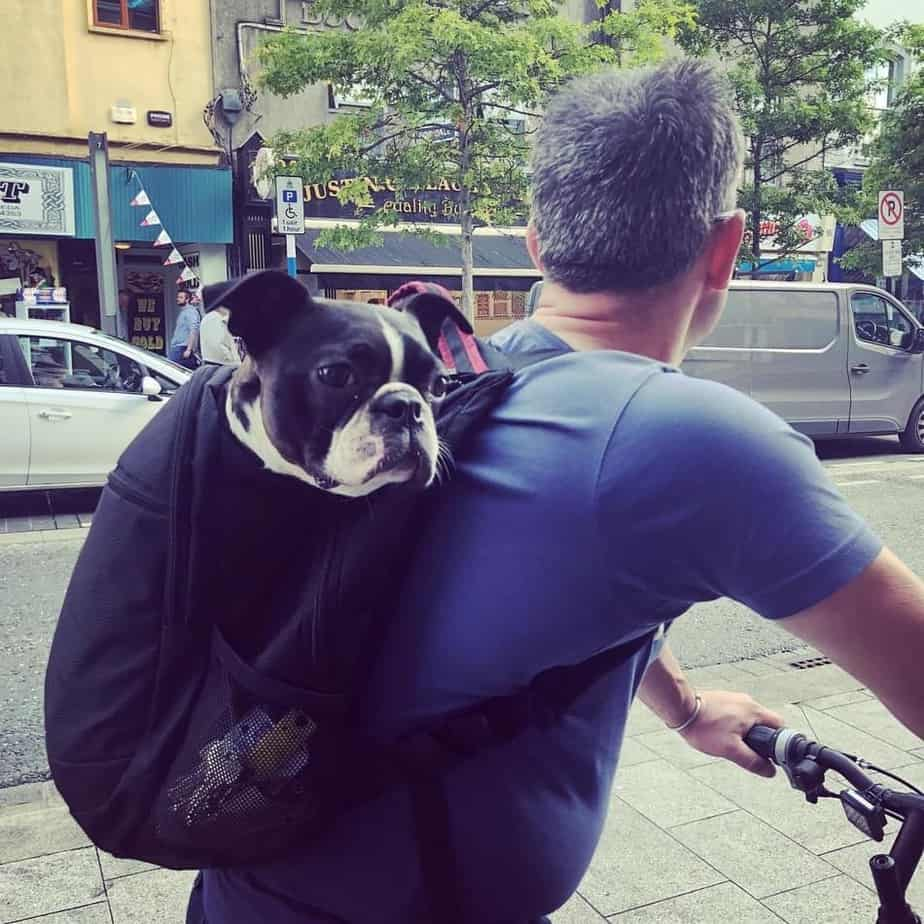 carrying-dog-backpack