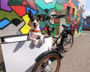 dogs-in-carrier-biking-with-dog